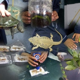 Grade 3's Science Incursion